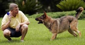 Šunų dresūra